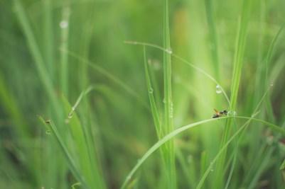 Bug on the green - skinnestrock79