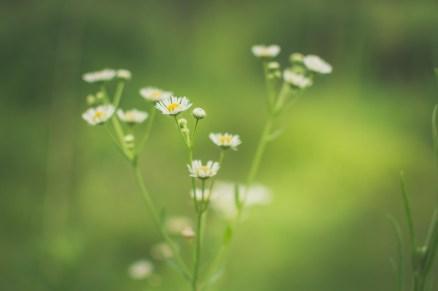 Flowers - skinnestrock79