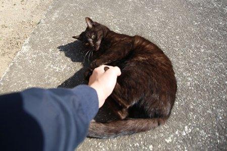 蛭子宮で出会った猫ちゃん