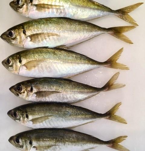 『坂出水産地方卸売市場』で魚日和