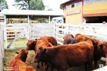 Sindicato Rural_2018 (44)