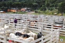 Sindicato Rural_2018 (55)