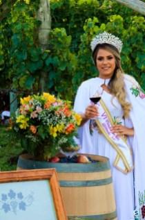 Vinícola Suzin - Vindima (34)