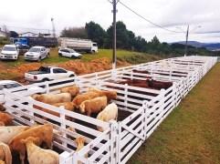 Sindicato Rural 2019 - Feira (1)