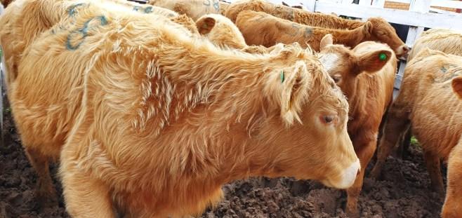 Sindicato Rural 2019 - Feira (60)