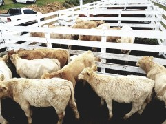 Sindicato Rural 2019 - Feira (66)