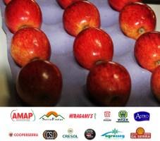 Premiação da maçã (4)