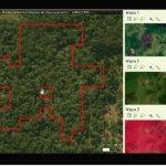 ima_lanca_sistema_para_monitorar_desmatamento_ilegal_em_santa_catarina_20210604_1170902020.jpeg