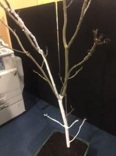Xmas Tree1