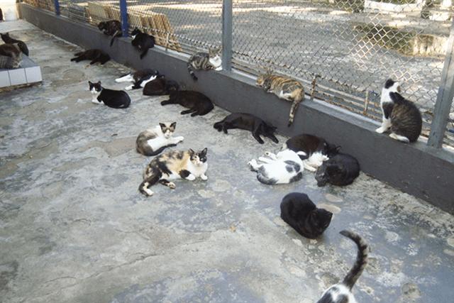 Gatos a espera de adoção na UIPA