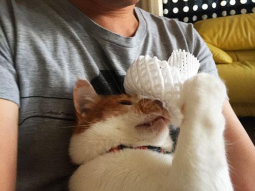 Saori Mochizukiの猫 てんちゃん