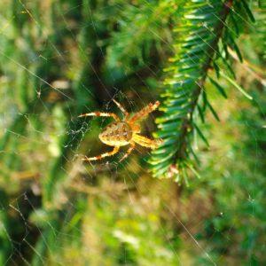 araignée sapio bio de noël