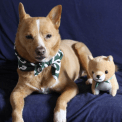 Matching dog and toy set