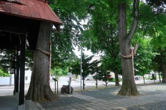 中の島神社 御神木
