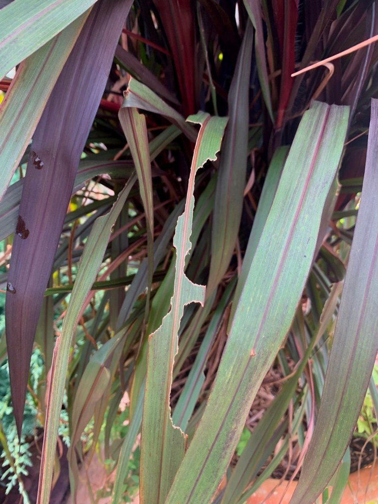 Master Gardener: Controlling Grasshopper Damage