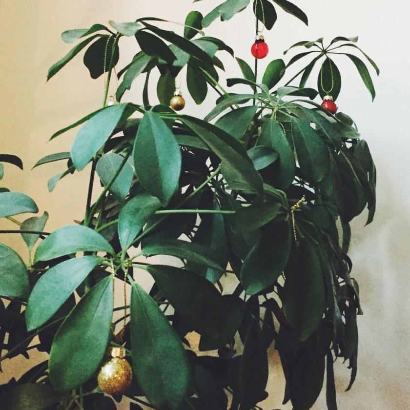 julpyntad växt