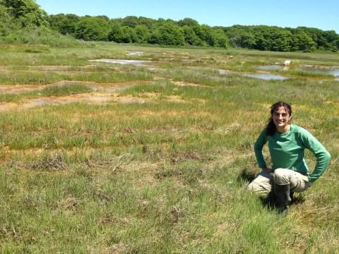 Barn Island Wildlife Management Area, Stonington, CT