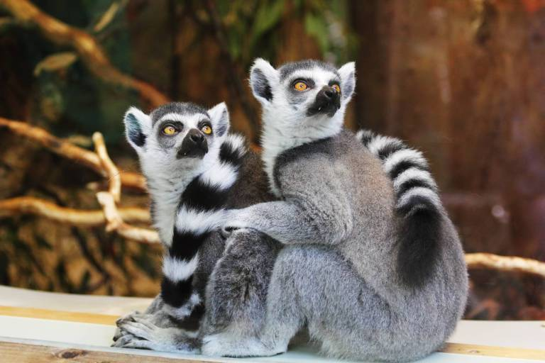 nature cute animals outdoors