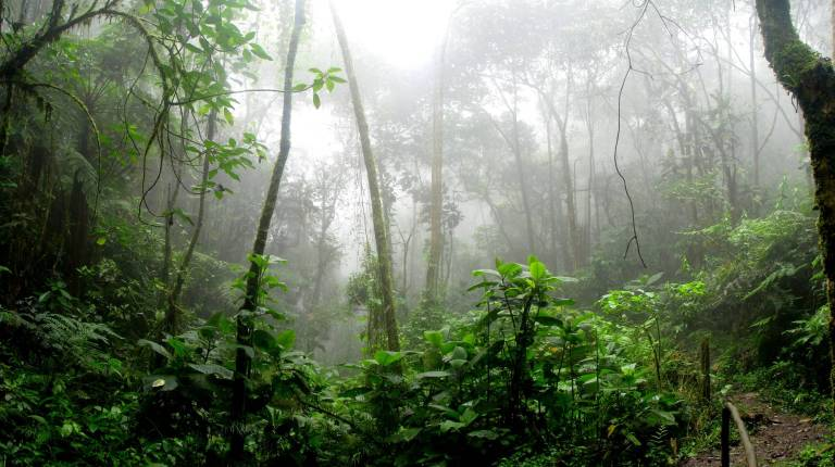 rainforest during foggy day