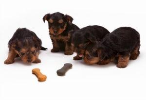 Sara Grillo - Puppies and bones