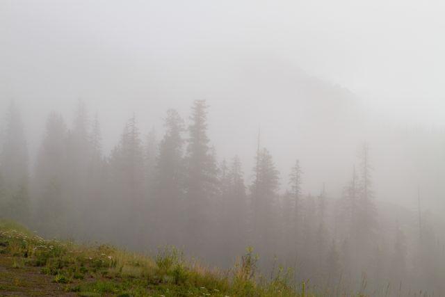 Fog Cherish