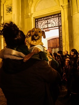 A dog in the arms of its human, waiting for a blessing