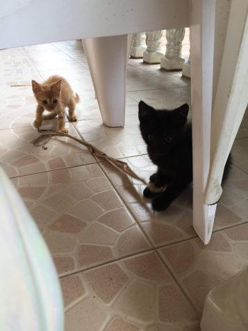 Cutest 3 kittens, and their mom, seem to be wild but to be permanently at the cottage. We had fun playing with them with leaves.