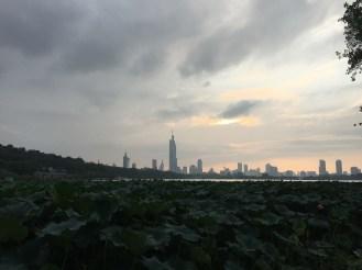 Xuanwu Lake and its beautiful lotus plants.