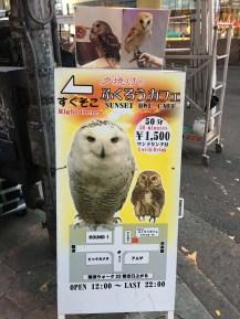 Owl cafes