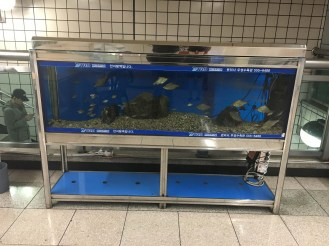Why is there an aquarium in the train station? I don't really want to know, I prefer to use my imagination.