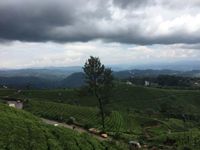 Munnar tea plantations.