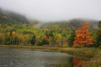 Acadia in the Fall