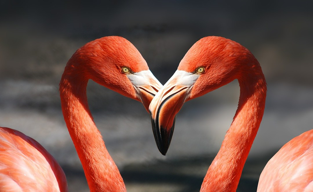 Ways to Make Customers Fall in Love with you and your Business