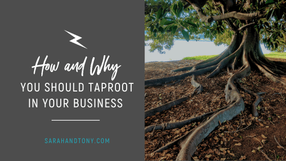 How and Why you should Taproot in your Business