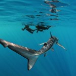 Jaws and Open Water Swimming
