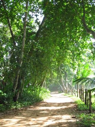 Path near Playa Bluff in Bocas del Toro, Panama