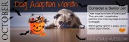 dog adoption banner