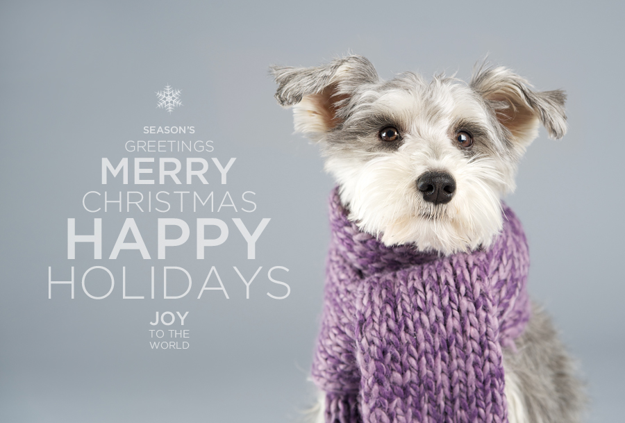 Happy Holidays Minneapolis Saint Paul Minnesota Dog
