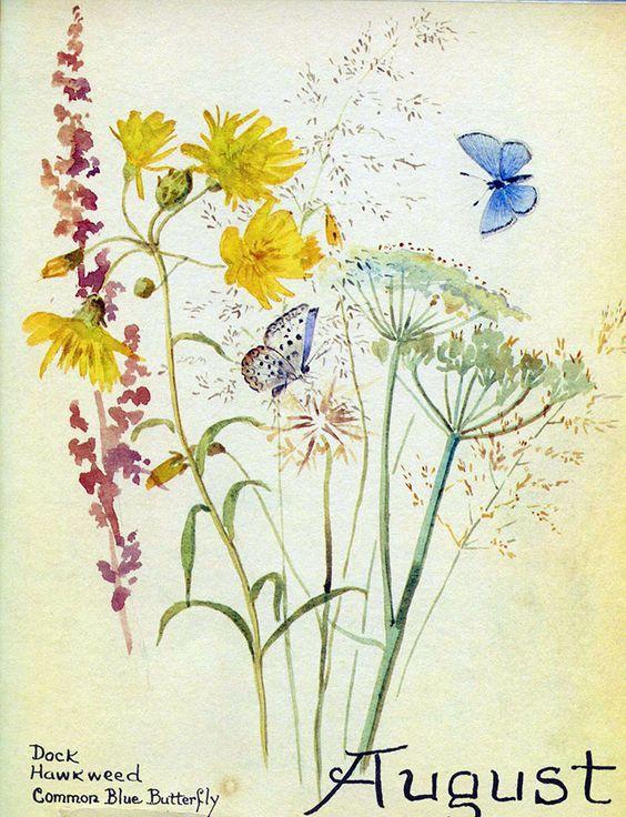August. 1905. Edith Holden, artist.