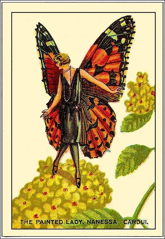"""""""The Painted Lady Nanessa."""""""