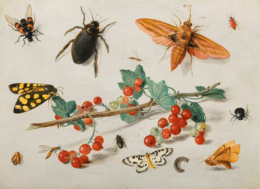 """A sprig of redcurrants with an elephant hawk moth, a ladybird, a millipede and other insects."" 1657."