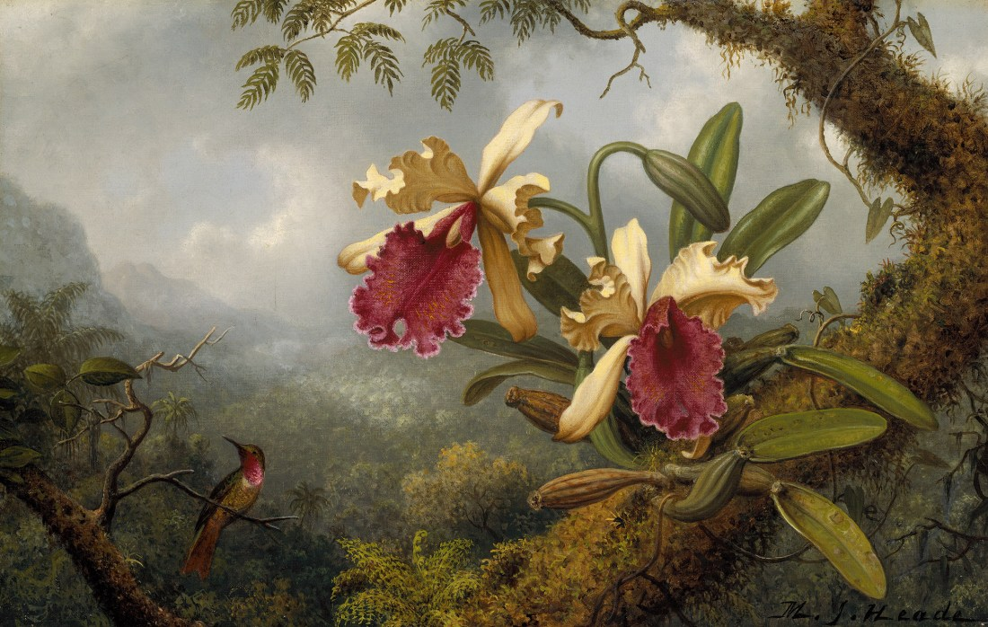"""""""Orchids and Hummingbird."""" Probably 19th c."""