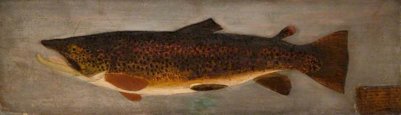"""""""Brown Trout."""" 1878."""