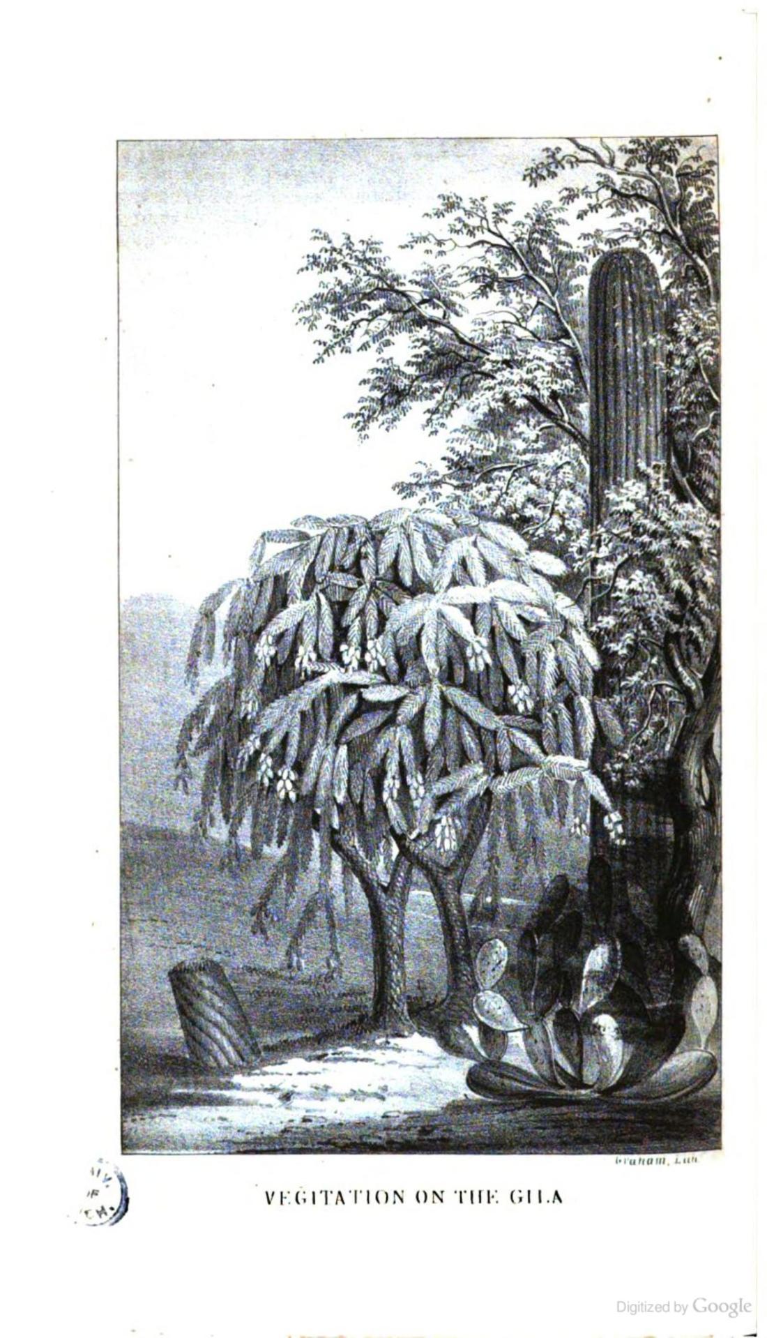 """Vegetation of the Gila."" Page 104."