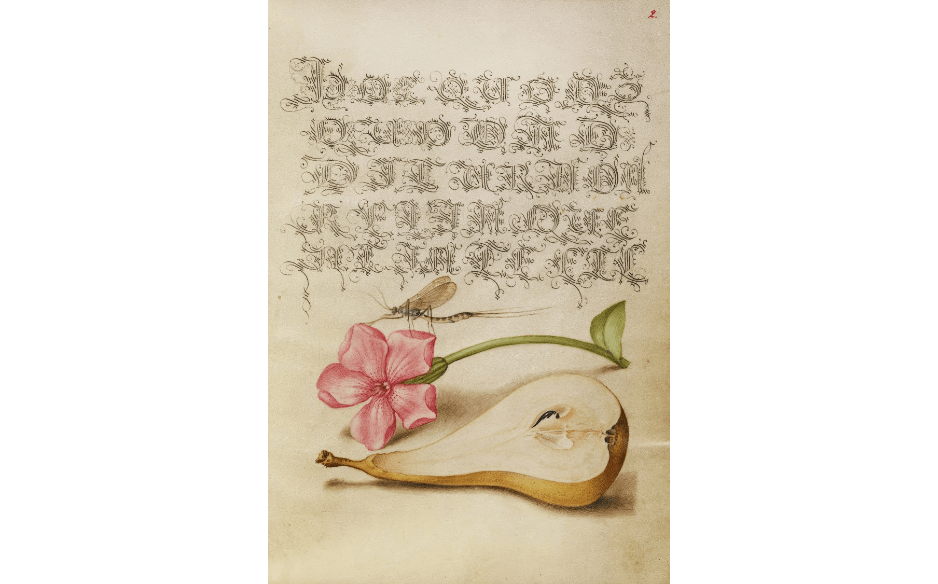 """Mayfly, Red Campion, and Pear."""