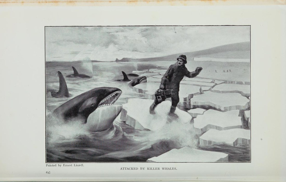 """""""Attacked by Killer Whales."""""""