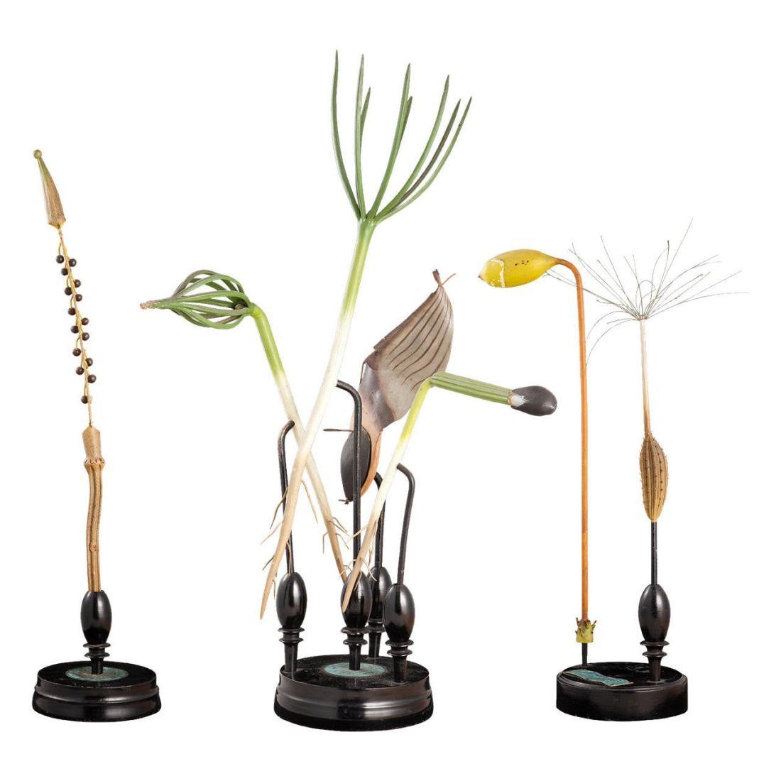 Three botanical models.