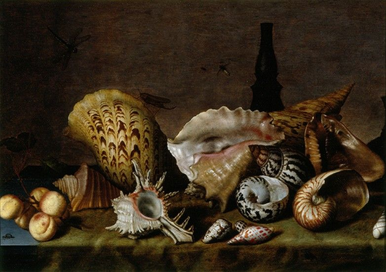 Seashells. 1630-50. Dutch.