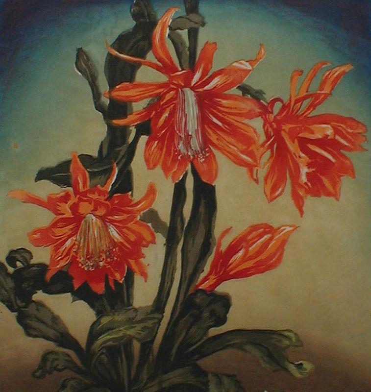 Christmas-Cactus-by-Hugo-Noske (1)