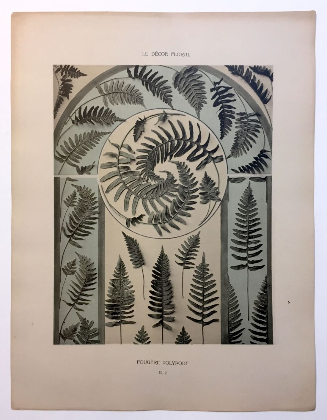 """""""Fougere Polypode."""" Plate 2."""